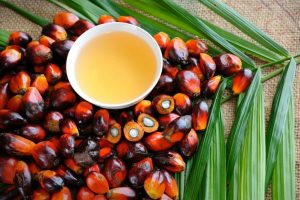 Get to know Magnesium, an Important Element in Oil Palm Growth