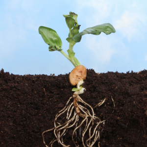 The Important Role of Microbes in Plant Nutrient Supply
